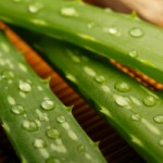 Aloe vera leaf with water drops on top.