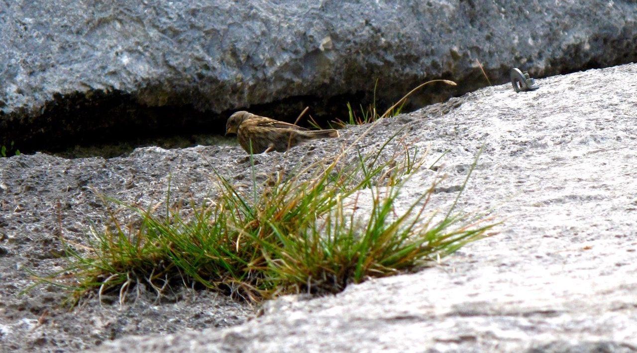 Vogel der neben einem Kletterbold sitzt