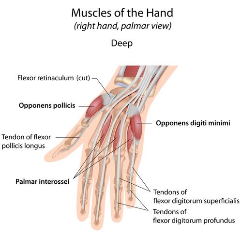 Prävention von Verletzungen beim Klettern – Manox